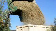 biomasa_olivo_baja