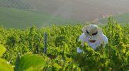 viña ecologica 5